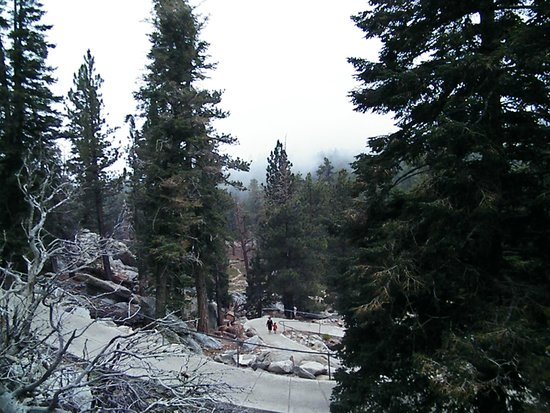Palm Springs Aerial Tramway: trees in the rain
