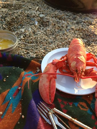 Oceanfront Camping at Reach Knolls: Lobster dinner on the beach