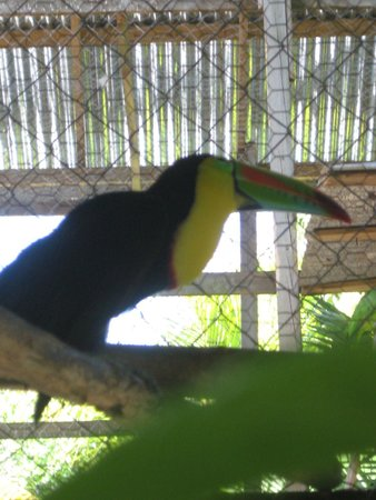 Bodden Tours: toucan