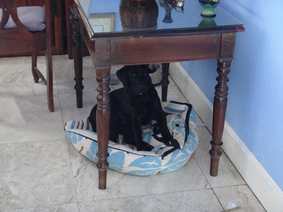 Jamaica Inn: Resort puppy, Shadow