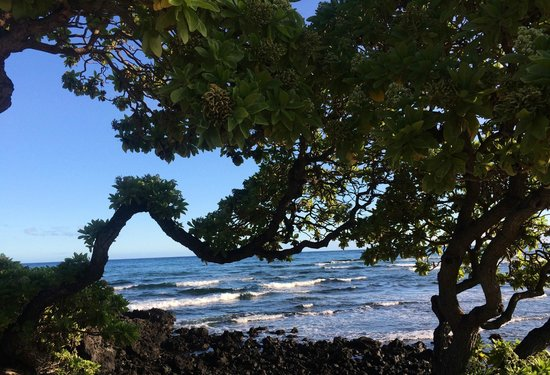 Four Seasons Resort Hualalai: view from paved beachside path
