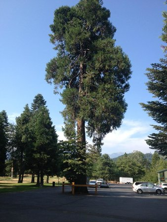 BEST WESTERN PLUS Tree House: Redwood in the parking lot