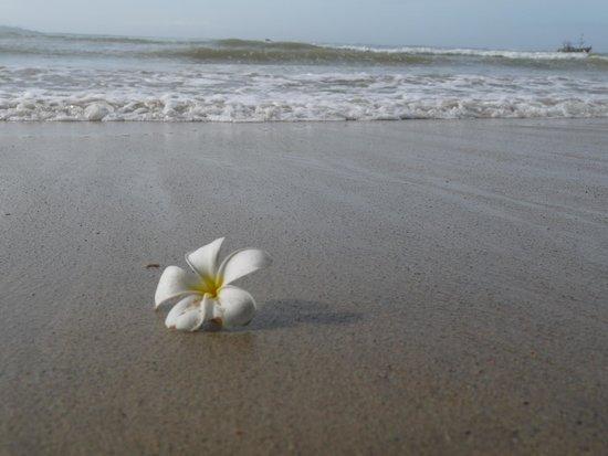 Heritage Weligama: beach outside