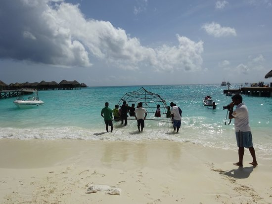 Constance Halaveli : サンゴプロジェクト、貴重な体験させてもらいました