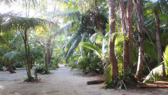 Denis Private Island Seychelles : The Island pathways