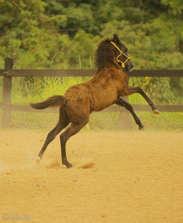 Establo San Rafael B&B: foal born March