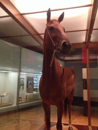 Melbourne Museum: Phar Lap. Amazing museum. So much to see