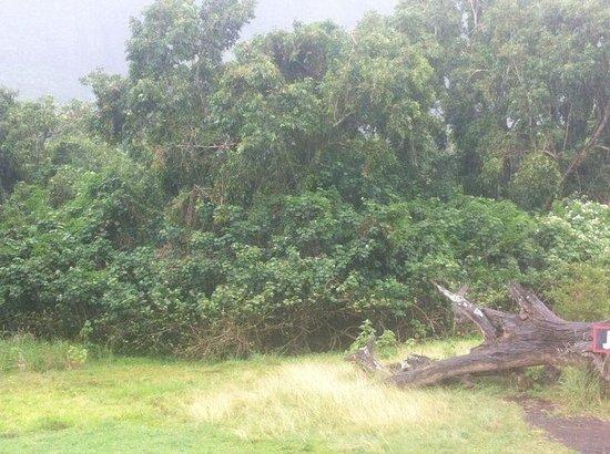Kualoa: Jurassic park zone