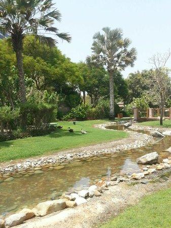 Grand Hyatt Dubai: green areas/ducks