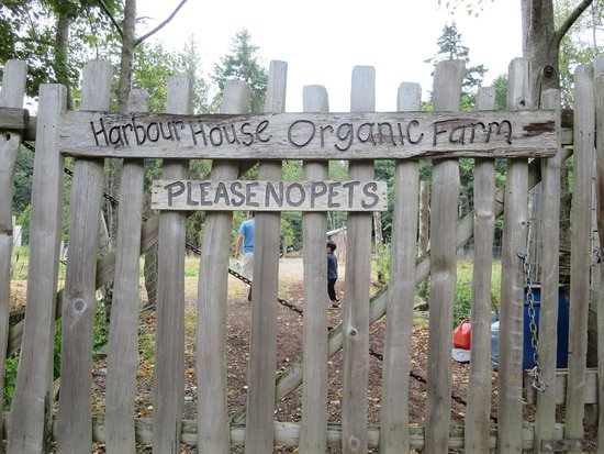 Harbour House Hotel : Don't miss your chance to explore the Organic Farm