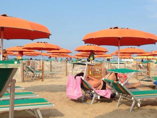 Hotel Aristeo: Area per cani recintata nella spiaggia convenzionata.