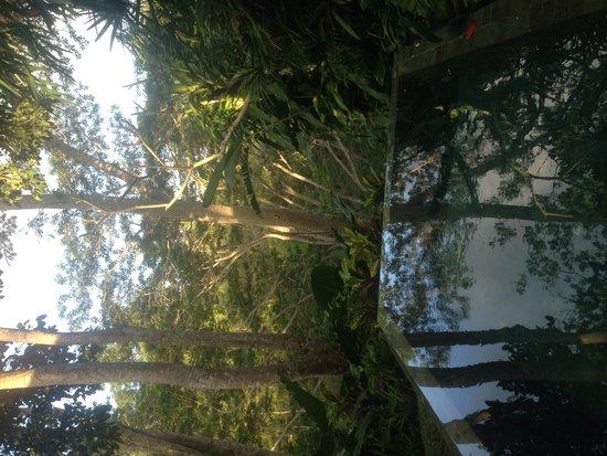 Maya Ubud Resort & Spa: Piscina camera