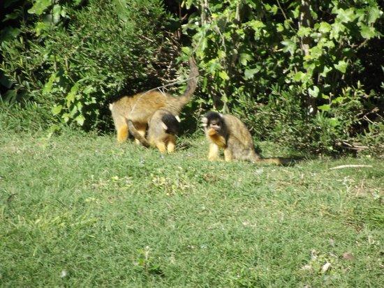 Reserve Africaine de Sigean: Parc  à pied Mago