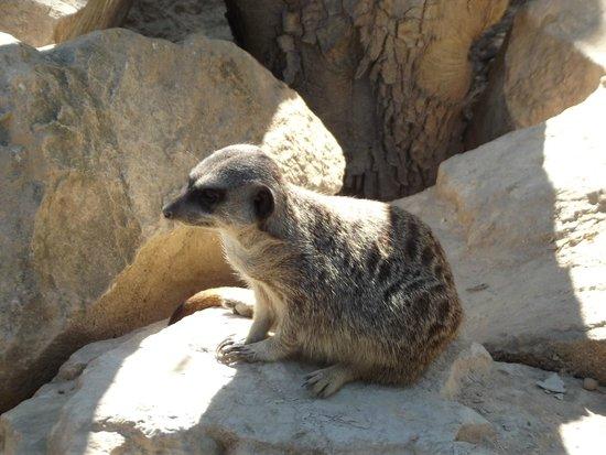 Reserve Africaine de Sigean: Parc à pied Suricate