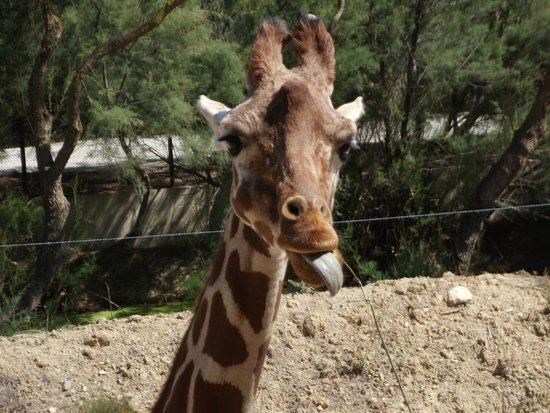 Reserve Africaine de Sigean: Parc à pied Girafe