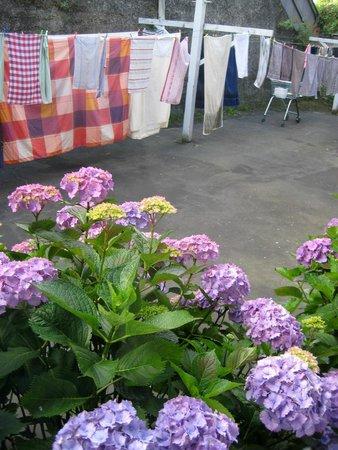 Hogwartz Backpacker Hostel: backyard,  drying sheets.