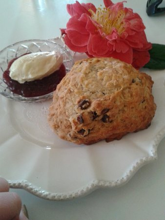 Melrose House Cafe: Beautiful scone- shame about the ants