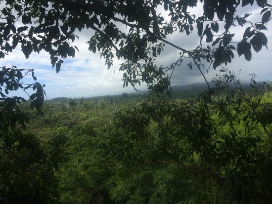 Falealupo Canopy Walk: On top