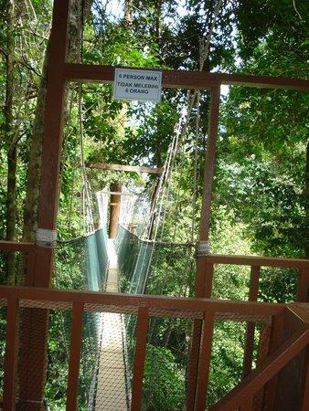 Kinabalu Park : Ponte sospeso