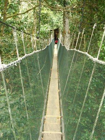 Kinabalu Park : Altro ponte