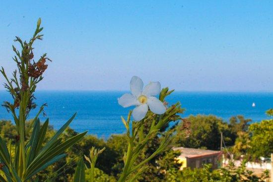Hotel Villa D'Orta : La vista����