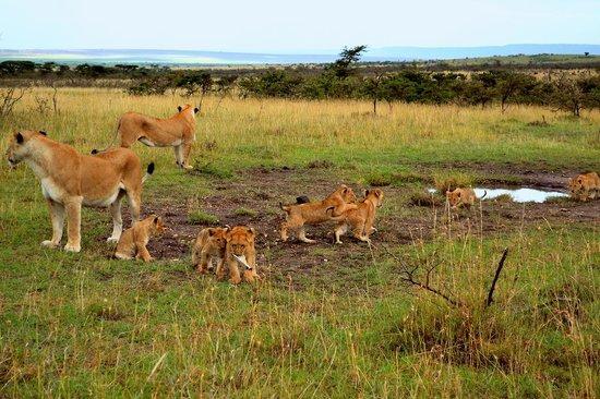 Olare Mara Kempinski Masai Mara: Safari with Rafael
