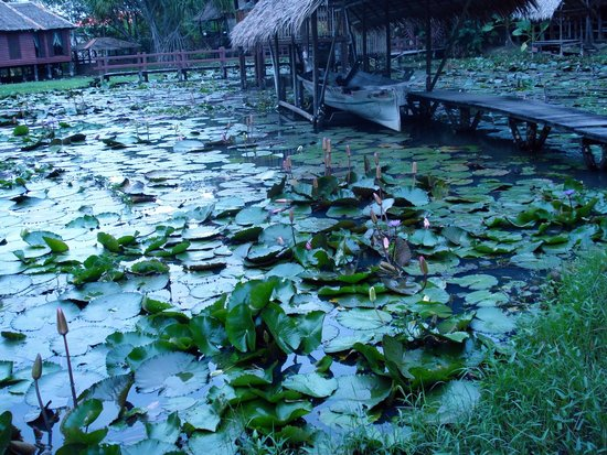 Sabah State Museum: Il lago del Museo