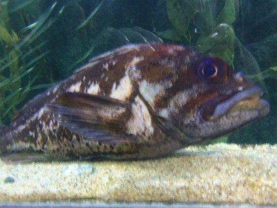 Aquarium of the Bay: fish