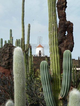 Jardin de Cactus: Il mulino