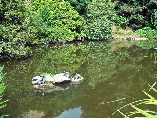 Laghetto delle tartarughe e i suoi abitanti picture for Tartarughe laghetto