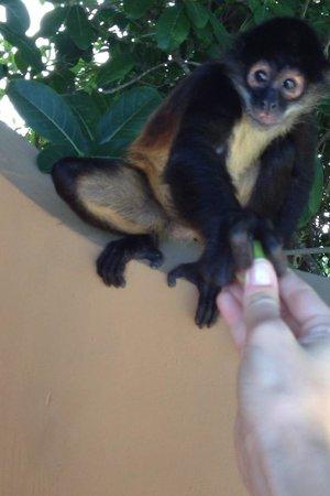 Sandos Caracol Eco Resort: Monkey
