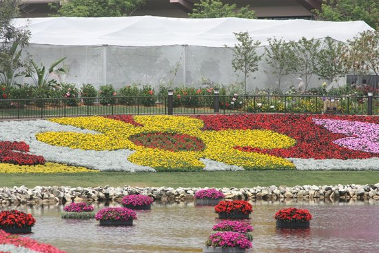 Epcot: Amazing flowers