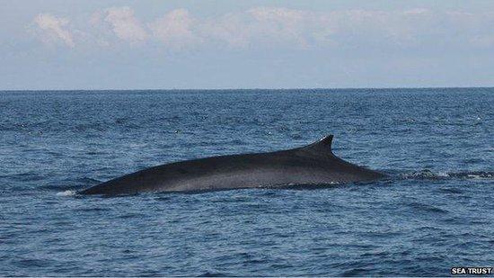 Cork Whale Watch: fin whale