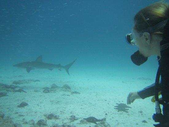 Academy Bay Dive Center: white tip sharks
