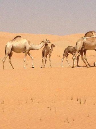 Qasr Al Sarab Desert Resort by Anantara: Road to Liwa Farms