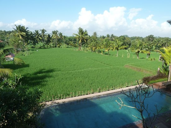 Inata Bisma Resort & Spa Ubud: View from my room!
