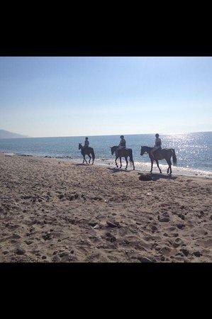 Rafaels Trail Riding: Rafael's swim with the horses