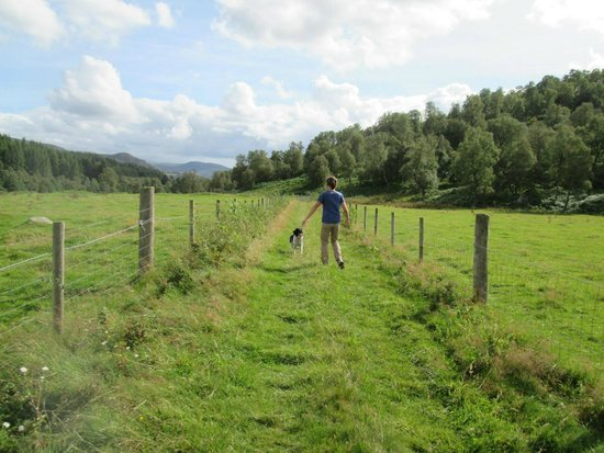 Wildside Highland Lodges: View nearby on walk - my boy and dog!