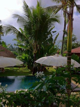 Piscine et ambiance à proximité d'Ubud