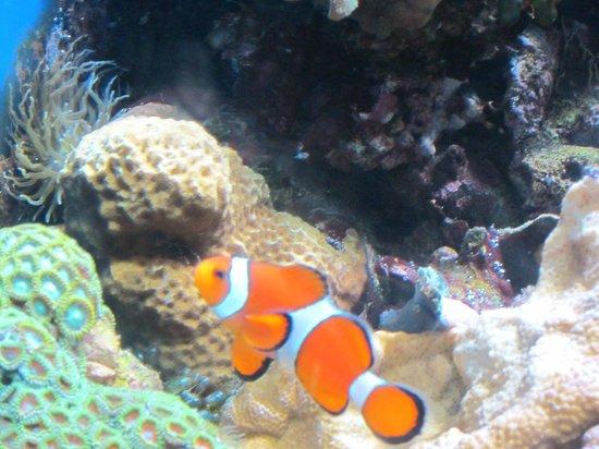 ZSL London Zoo: Clown fish