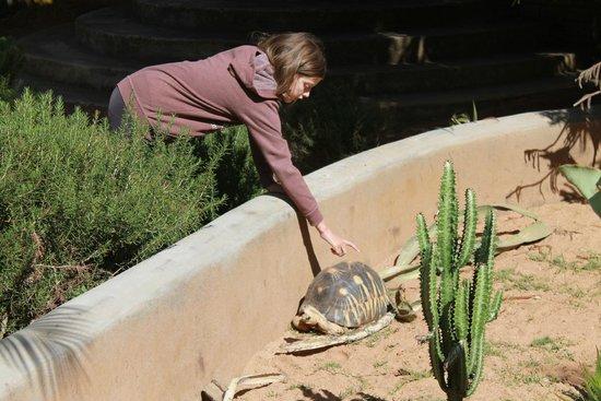 Hotel Au bois vert: Resident Tortoises!
