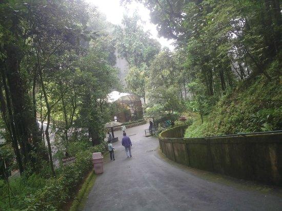 Padmaja Naidu Himalayan Zoological Park : Inside the zoo