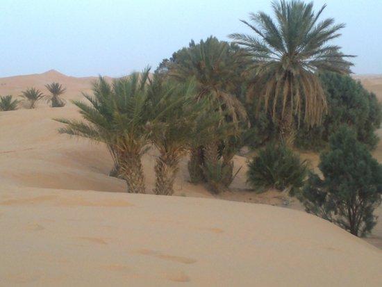 Camels House : en el hotel