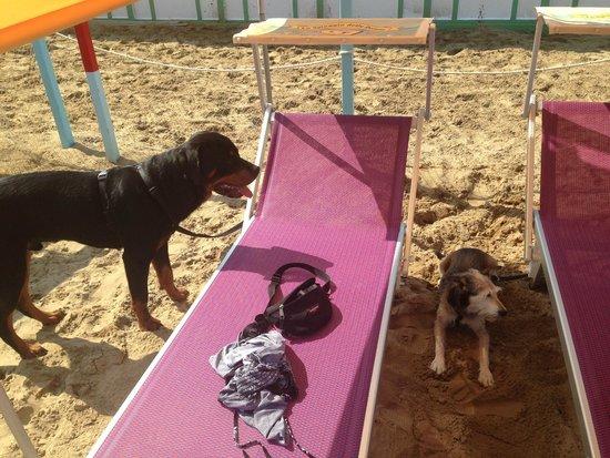 La Spiaggia delle Donne: Area recintata