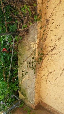 Hotel Golf Costa Brava : Paredes viejas y con falta de pintura