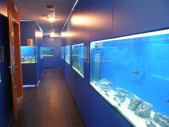 Adriatic aquarium Baska