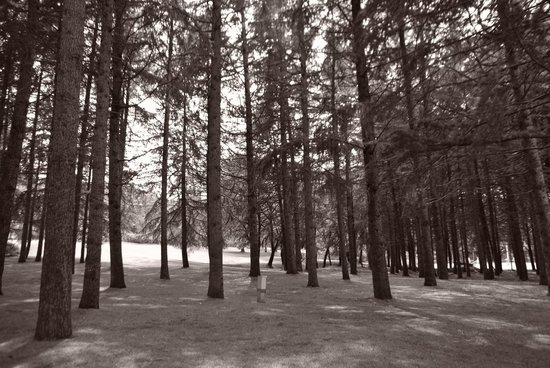 Hotel Laguna Mediteran: Black and White picture of woods within hotel grounds