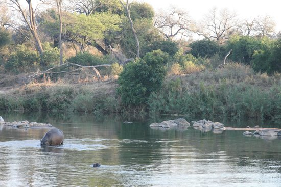 Naledi Bushcamp and Enkoveni Camp: Out on the drive
