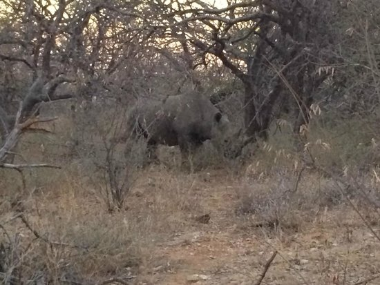 Naledi Bushcamp and Enkoveni Camp: White rino