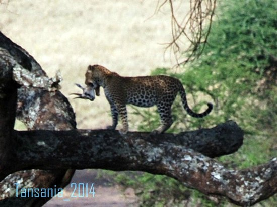 Warrior Trails Day Tour: A leopard and a gazelle